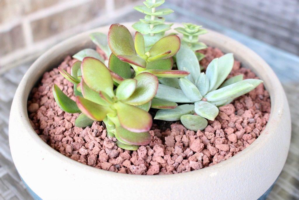 Lava Stone Succulent Diffuser Planter
