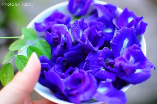organic-dried-butterfly-pea-flowers