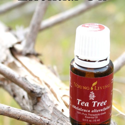 All about Tea Tree Essential Oil including tips, recipes and more from RecipeswithEssentialOils.com