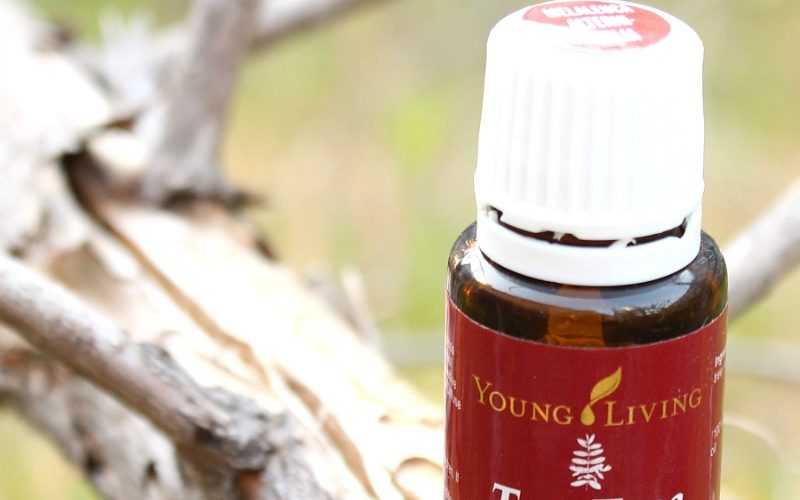 Getting to Know Your Oils – Tea Tree Essential Oil
