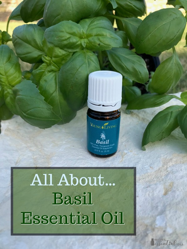 basil essential oil young living recipes and uses