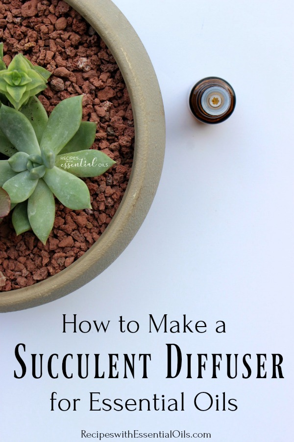succulent diffuser for essential oils