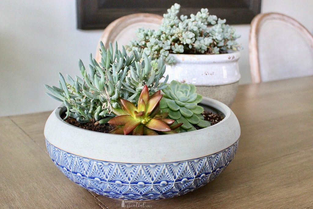 succulent variety plants in home