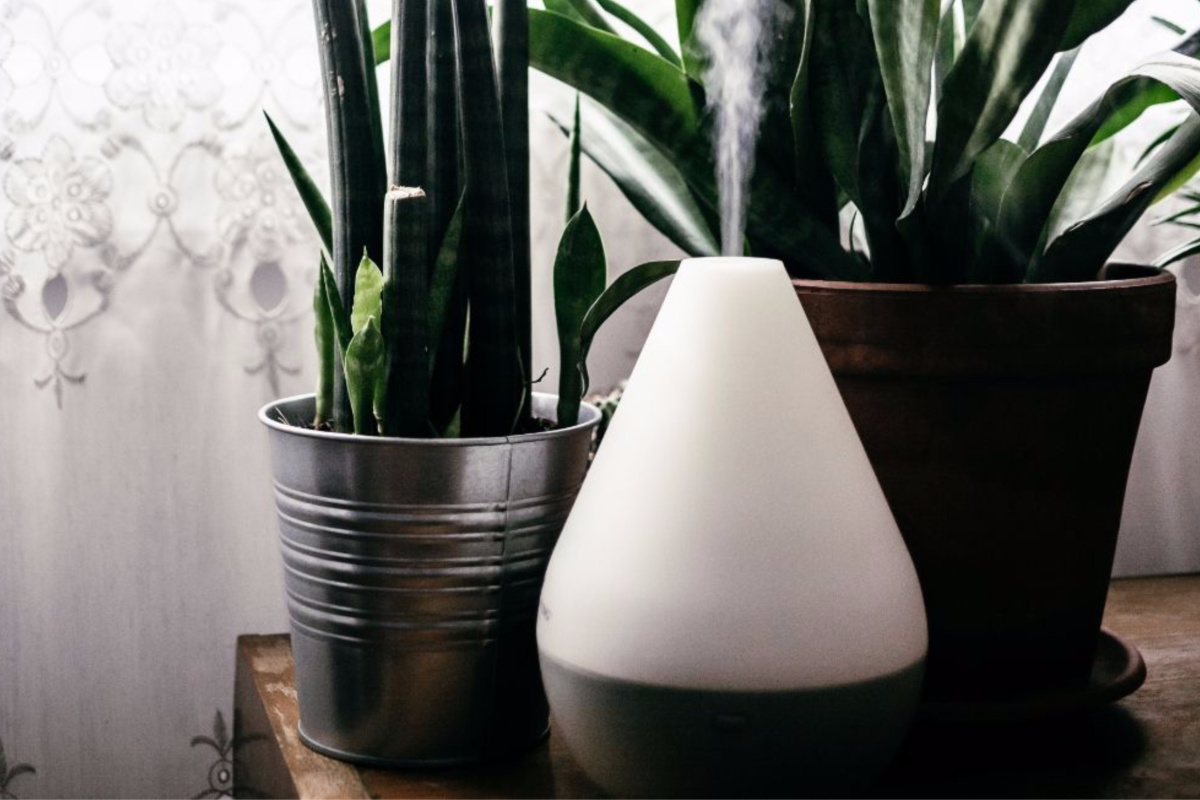 Diffuser Recipes To Bring The Outdoors In Recipes With Essential Oils