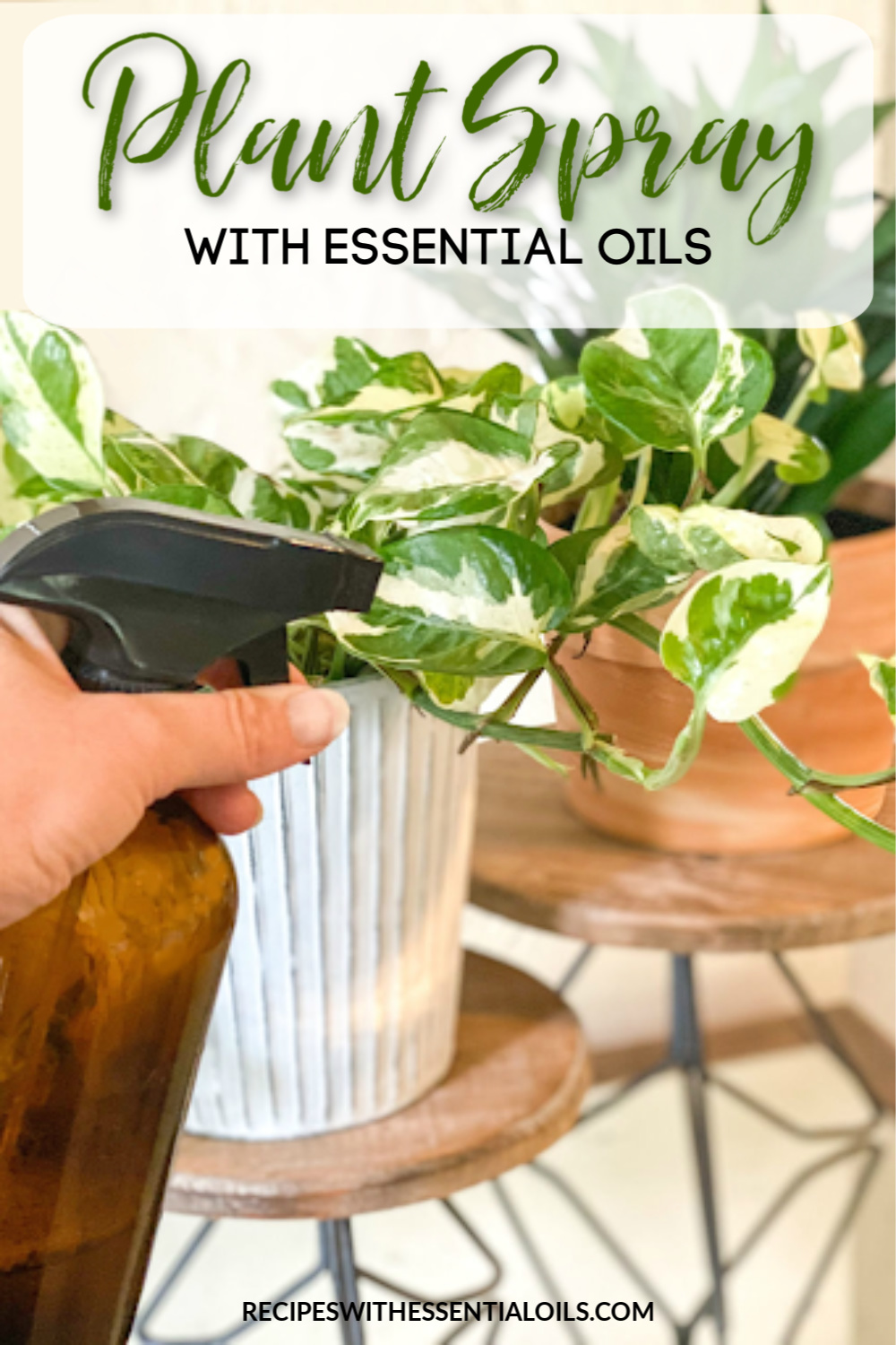 natural plant spray recipe essential oils
